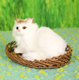 latex artificial realistic furry white cat toy
