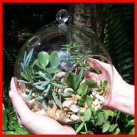 Hanging glass vase air plant terrarium for home decor(string rope free)