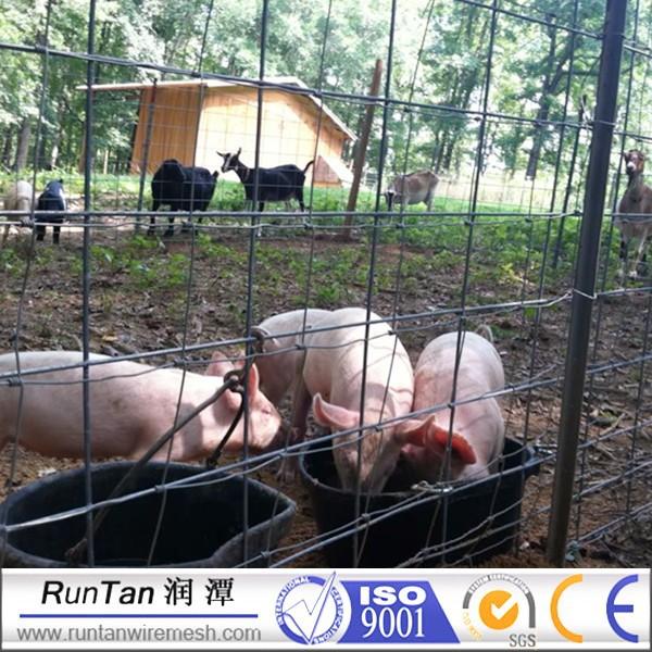 Finden Sie Hohe Qualität Schwein Bereich Zaun Hersteller und Schwein ...