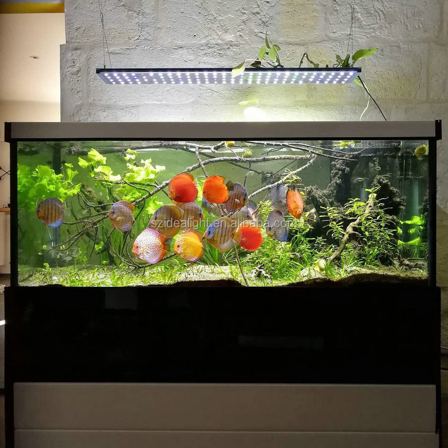 Fish Aquarium Rates In Delhi - 20000k led aquarium led light 20000k led aquarium led light suppliers and manufacturers at alibaba com
