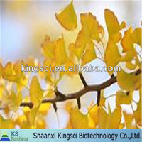 High quality of natural ginkgo biloba extract 24 6% water soluble5%