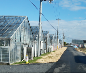High quality tunnel farming green houses for agriculture greenhouses