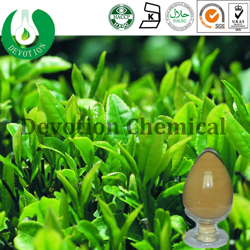 Hot sale pure Catechin / Natural health product/Green tea extract/Catechin