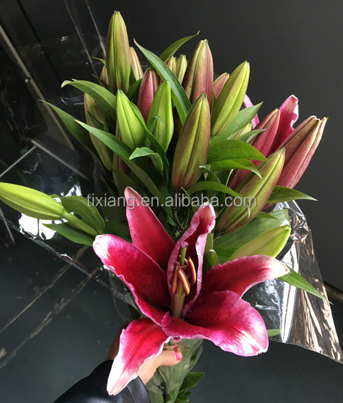 A grade big bud size lily fresh cut oriental lily flowers with long stem