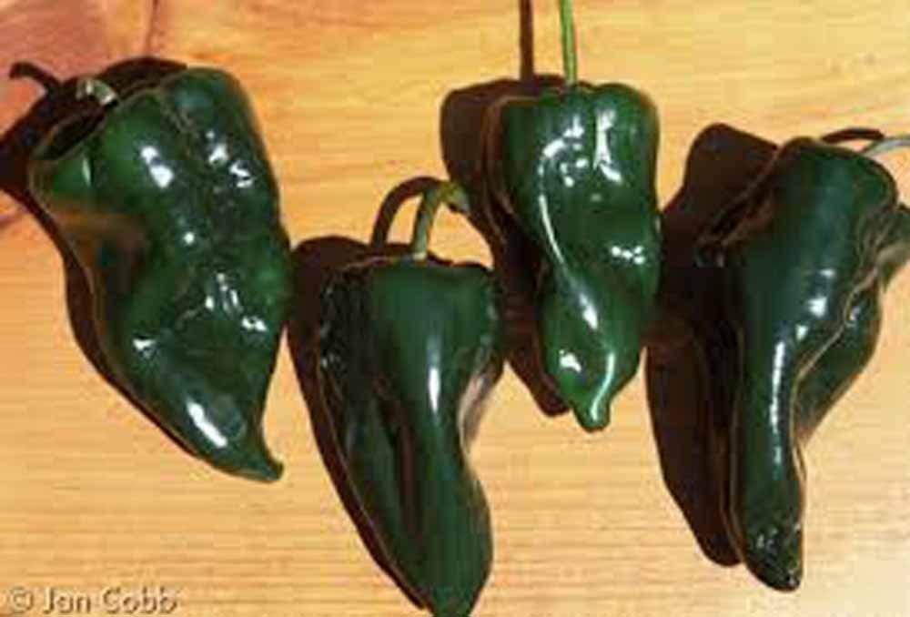 Beistle 57519 5-Pack Chili Pepper Whirls 3-Feet