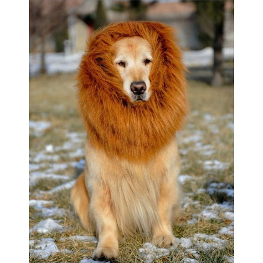 54d814bc6 Detail Feedback Questions about Pet Costume Dog Lion Wigs Mane Hair ...