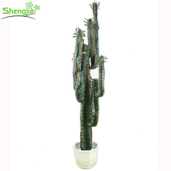 Factory Price Large Mexico Cactus Indoor Potted Plants For Office ...