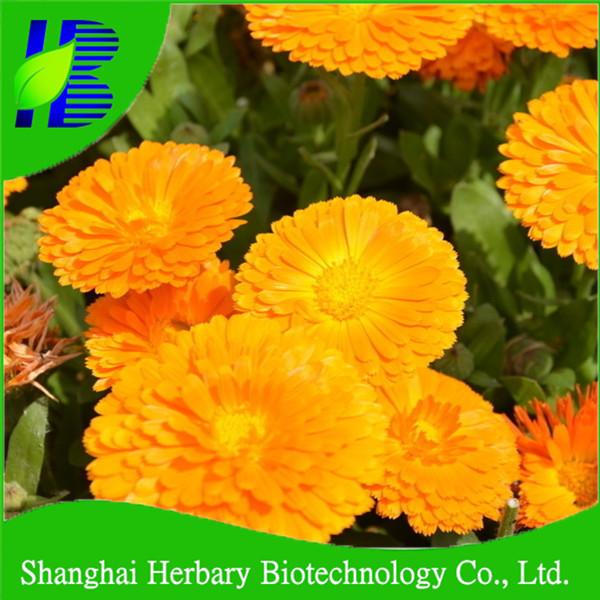 Perkecambahan Tinggi Calendula Officinalis Bunga Untuk Penanaman Buy Flower Rose Bunga Benih Biji Bunga Product On Alibaba Com