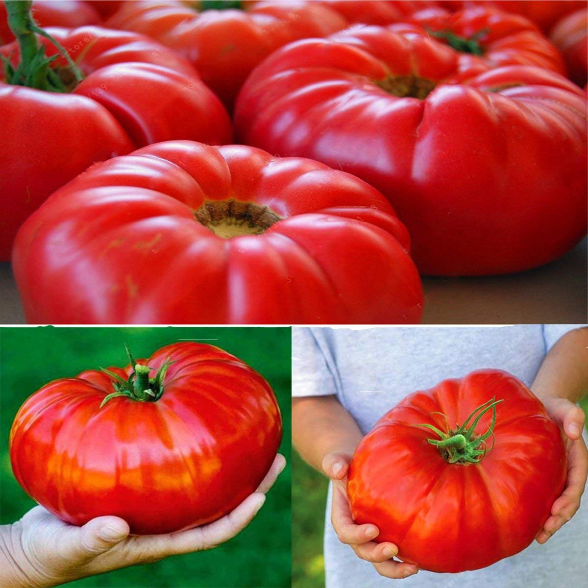 100 pcs/bag Hybrid Giant Tomato Seeds Super Big Beefsteak Tomato Vegetable Garden Plants Seed