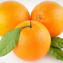 Sweet Fresh Mandarin Naval Orange