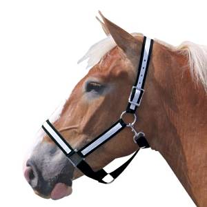 Intrepid International Draft Horse Nylon Halters with Overlay