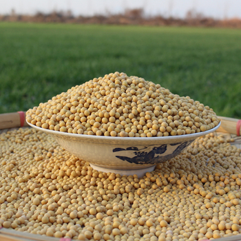 Wholesale Organic Bulk Soybeans Seeds With High Quality - Buy  Soybeans,Soybean Seeds,Wholesale Organic Bulk Soybeans Seeds With High  Quality Product