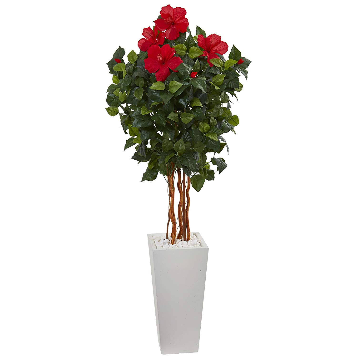 Cheap Braided Hibiscus Tree Find Braided Hibiscus Tree Deals On