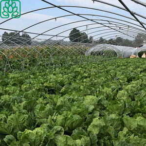 Single Span Green House Film Vegetable Greenhouse for Tomato
