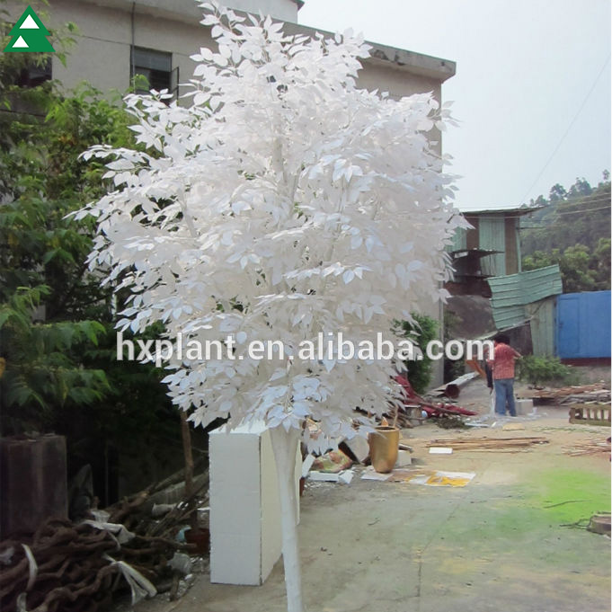 all kinds of ficus tree all kinds of ficus tree suppliers and at alibabacom - Ficus Trees