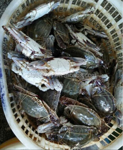 Best selling products frozen Crab