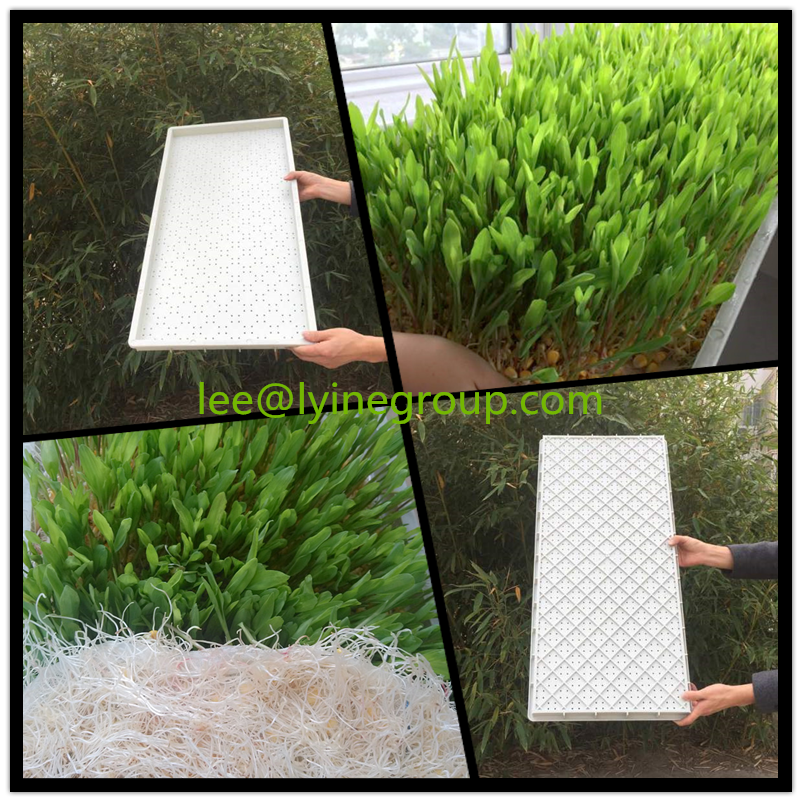 greenhouse seed biodegradable germination tray