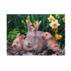 3D Small Animal Picture 3D Animals Picture Moving Rabbit Design
