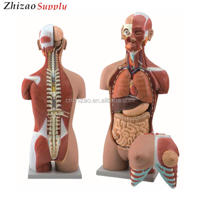 Finden Sie Hohe Qualität Ganzkörper Anatomie Hersteller und ...