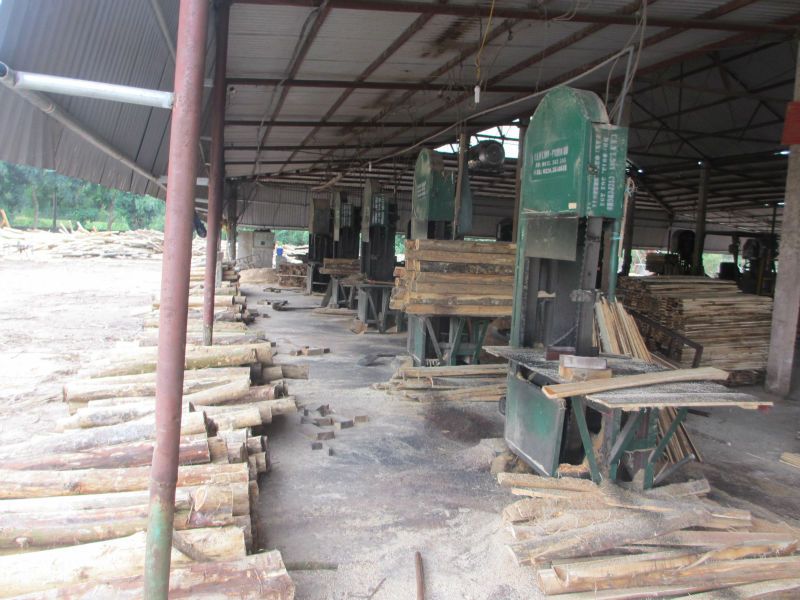 Vietnam Acacia wood logs