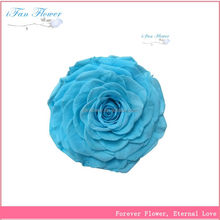 The most popular competitive various colors preserved rose crafts