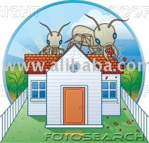 Termite and Pest Control services