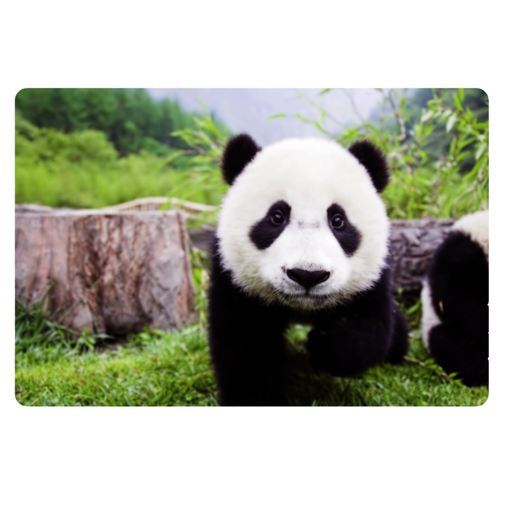 Cute-Panda-Animal-Printing-Front-Entrance-Door-Mats-Funny ...