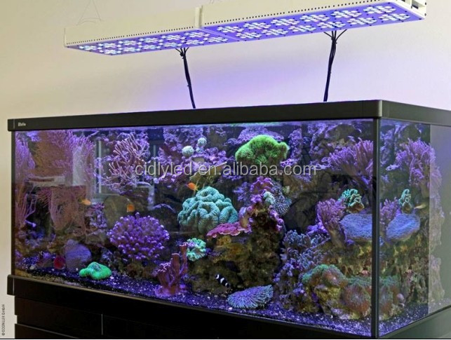 Cidly volledige spectrum high power led aquarium licht voor koraal en rif 12, mariene maanlicht aquarium