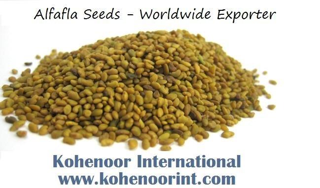 Alfalfa Seedalfalfa (medicago Sativa)seeds.