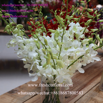 Professional Supply Orchid Cutting And An Preserved Flower Arrangements For Wedding Bouquet Flowers