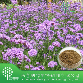 100% Natural Blue Vervain Verbena Extract Powder Herb Plant Extract 4:1