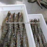 tiger shrimp and frozen seafood products