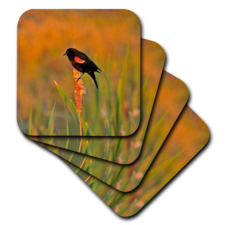 3dRose CST_93613_3 USA, Oregon, Portland. Red-Winged Blackbird Us38 Bja0547 Jaynes Gallery Ceramic Tile Coasters, (Set of 4)