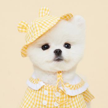 Hot Sale Cute Pomeranian Puppy Elegant Summer Yellow Picnic Leisure Skirt Suit with Hat