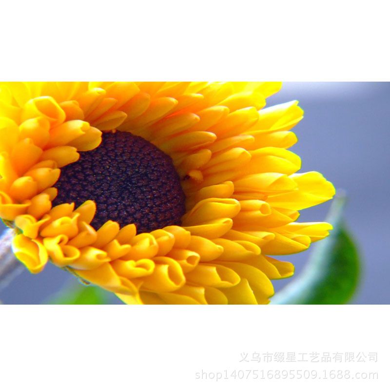 Cheap Yellow Flowers Meaning Find Yellow Flowers Meaning Deals On