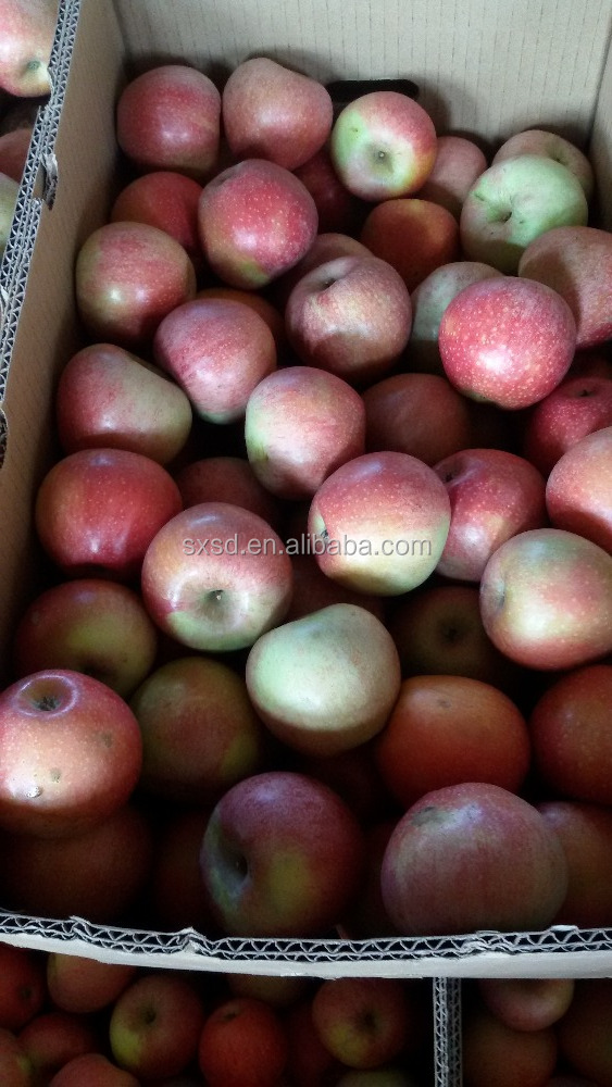 2017 best selling chinese fresh wholesale royal gala red qinguan apples fresh fruits apples
