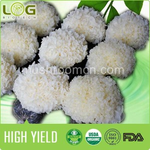 China Spawn Mushroom, China Spawn Mushroom Manufacturers and