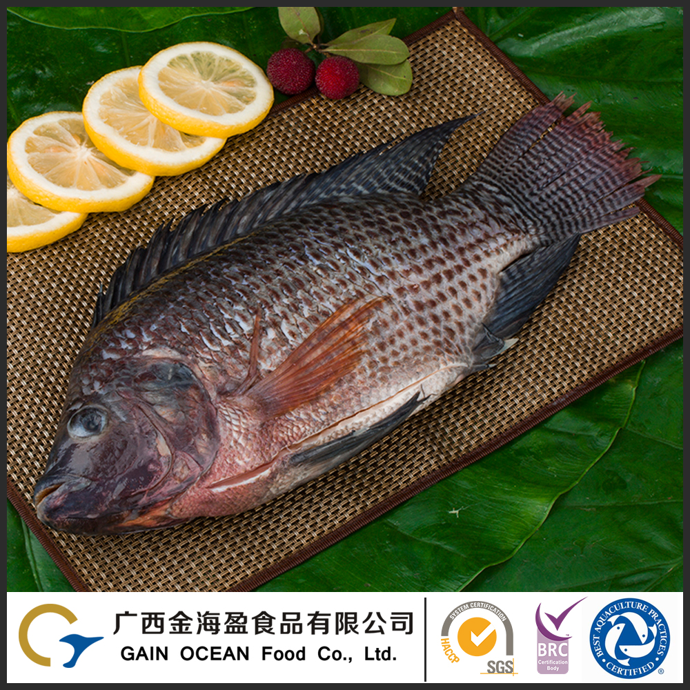 Whole Fish Frozen Gutted and Scaled Fresh Tilapia