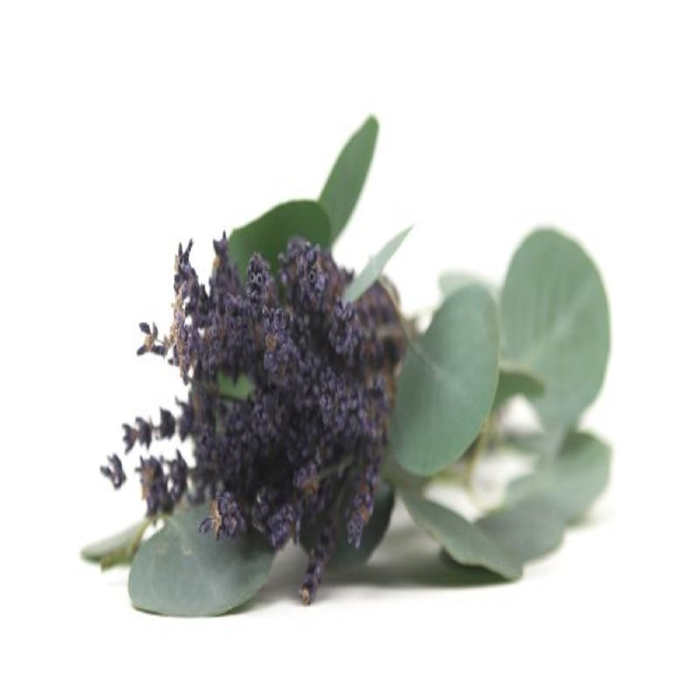 16 OZ//1 LB for Candle /& SOAP Making by VIRGINIA CANDLE SUPPLY Lavender Cucumber SAGE Fragrance Oil Free S/&H in USA