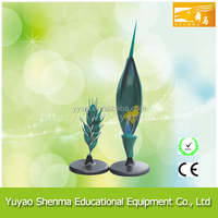 educational equipment Wheat Flower model