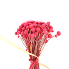 Wedding Decor natural Flower Mushroom grass mini small dry flower dried