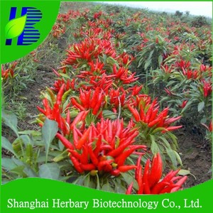 Hybrid red hot chili pepper seeds for sale