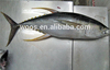 frozen small yellow fin tuna whole round to thailand