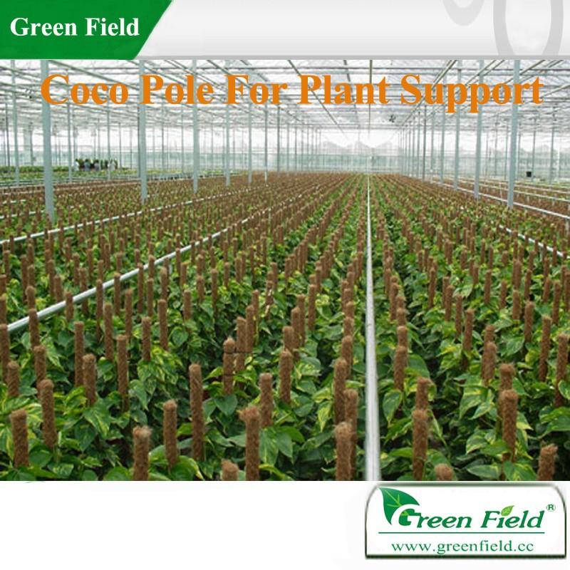 Green Field Coco Plant Support,Coco Pole Plant Support