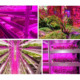 Full Spectrum SMD 2835 5050 4 Red 1 Blue 660nm UV Led Strip Grow Lights for Plants Growing Aquarium Greenhouse
