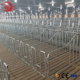 Hot DIP Galvanized Gestation Stall Pig Farm Gestation Crate for Pig