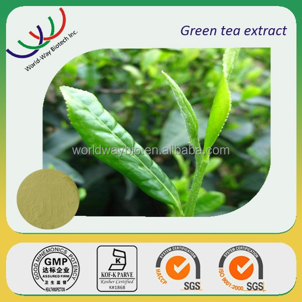 green tea extract KOSHER HACCP FDA manufacture natural catechin EGCG 98% Polyphenol