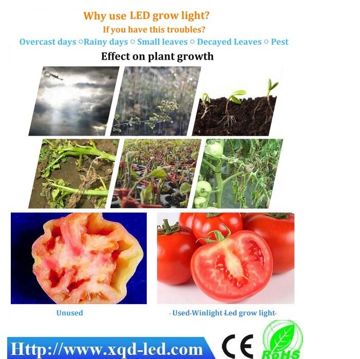 T8 60cm Plant Tube Grow Lights Grow Lettuce Plants Factory Indoor ...