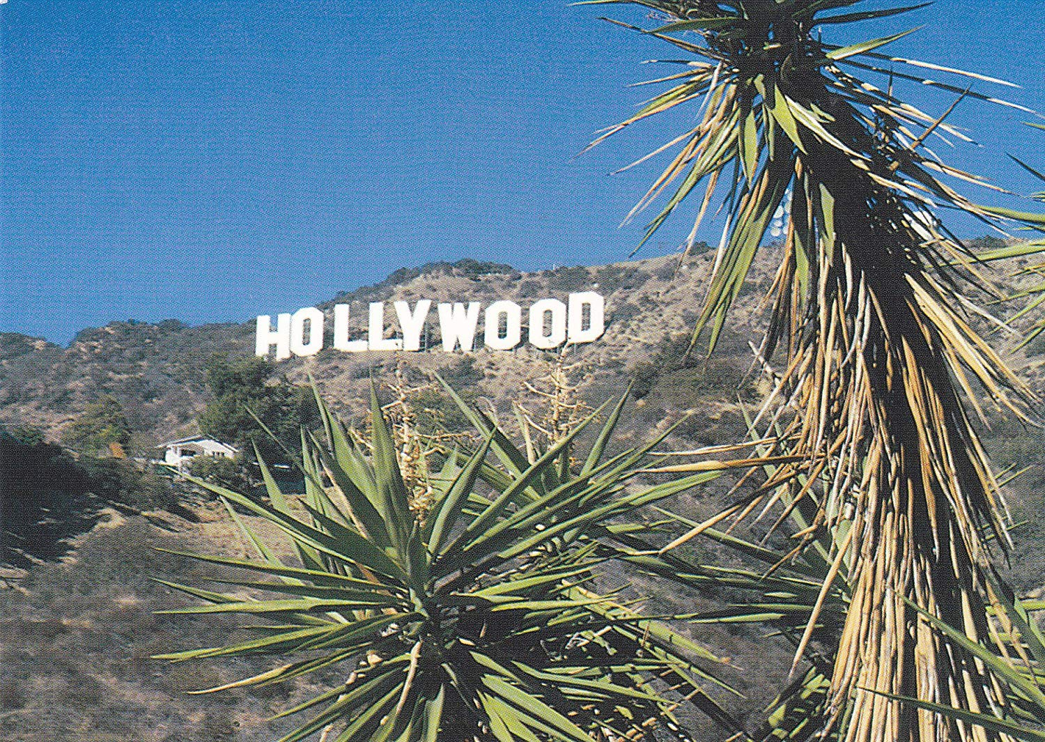 B&NLA244 LA244 View of Hollywood Sign Postcard . ... From Hibiscus Express