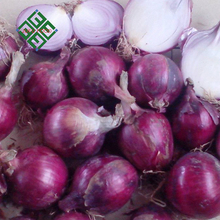 high quality cheap fresh red onions